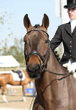 equine attorney
