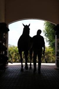 equine estate planning