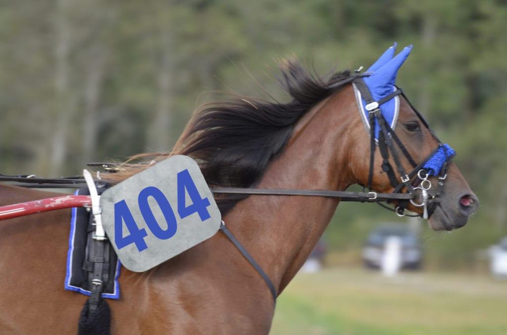 horse lawyer website - 404 error